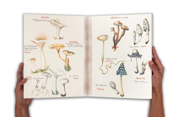 Ma collection de champignons bons et de champignons mortels
